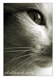 Great Photos of Cats and Dogs