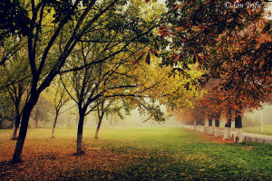 autumn_is_here_ii_by_john77-d5i2ujn